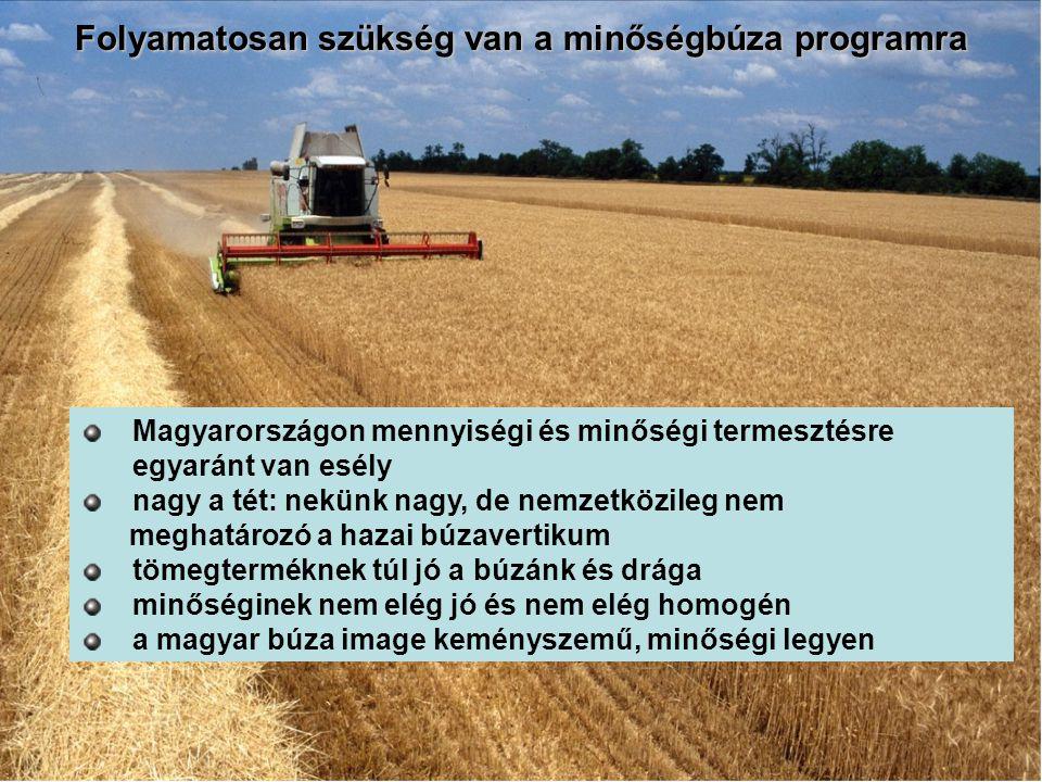 Magyarországon mennyiségi és minőségi termesztésre egyaránt van esély nagy a tét: nekünk nagy, de nemzetközileg nem meghatározó a hazai búzavertikum t