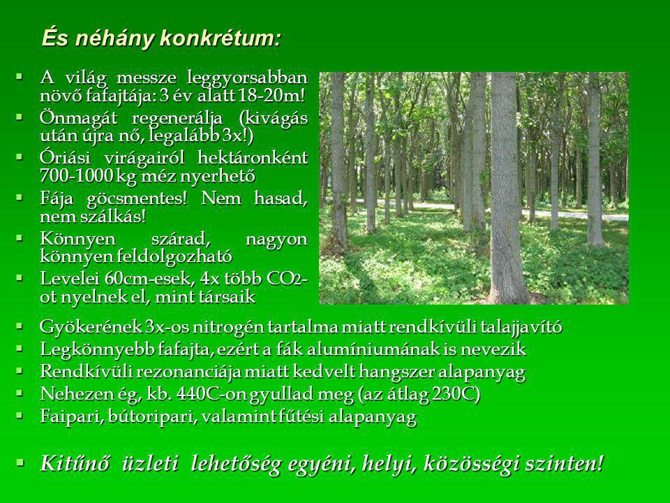 És néhány konkrétum:  A világ messze leggyorsabban növő fafajtája: 3 év alatt 18-20m!  Önmagát regenerálja (kivágás után újra nő, legalább 3x!)  Ór