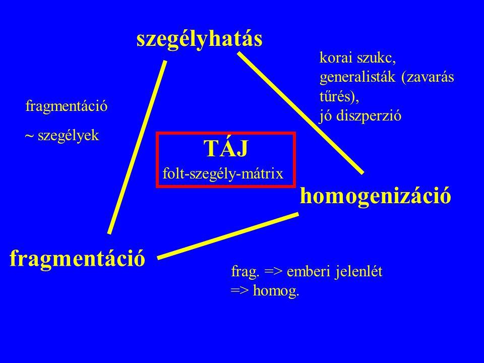 szegélyhatás fragmentáció homogenizáció korai szukc, generalisták (zavarás tűrés), jó diszperzió fragmentáció ~ szegélyek frag. => emberi jelenlét =>