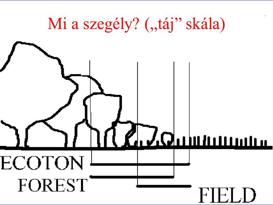 szegélyhatás fragmentáció homogenizáció korai szukc, generalisták (zavarás tűrés), jó diszperzió fragmentáció ~ szegélyek frag.