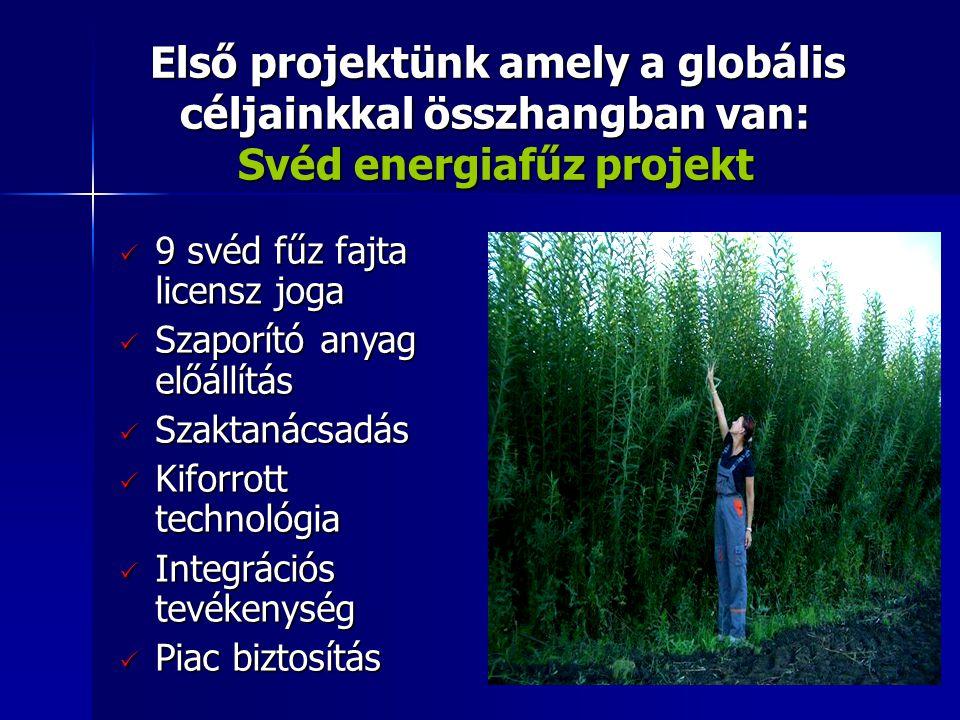 Első projektünk amely a globális céljainkkal összhangban van: Svéd energiafűz projekt Első projektünk amely a globális céljainkkal összhangban van: Svéd energiafűz projekt  9 svéd fűz fajta licensz joga  Szaporító anyag előállítás  Szaktanácsadás  Kiforrott technológia  Integrációs tevékenység  Piac biztosítás
