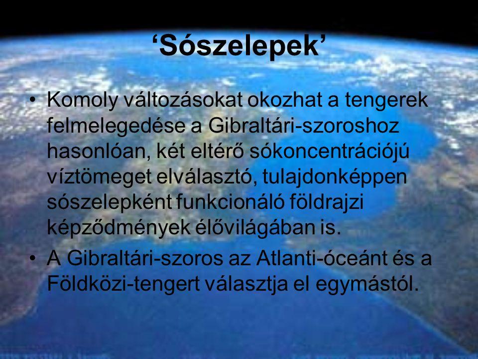 'Sószelepek' •Komoly változásokat okozhat a tengerek felmelegedése a Gibraltári-szoroshoz hasonlóan, két eltérő sókoncentrációjú víztömeget elválasztó, tulajdonképpen sószelepként funkcionáló földrajzi képződmények élővilágában is.