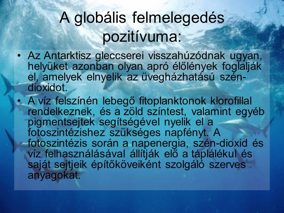 A globális felmelegedés pozitívuma: •Az Antarktisz gleccserei visszahúzódnak ugyan, helyüket azonban olyan apró élőlények foglalják el, amelyek elnyel