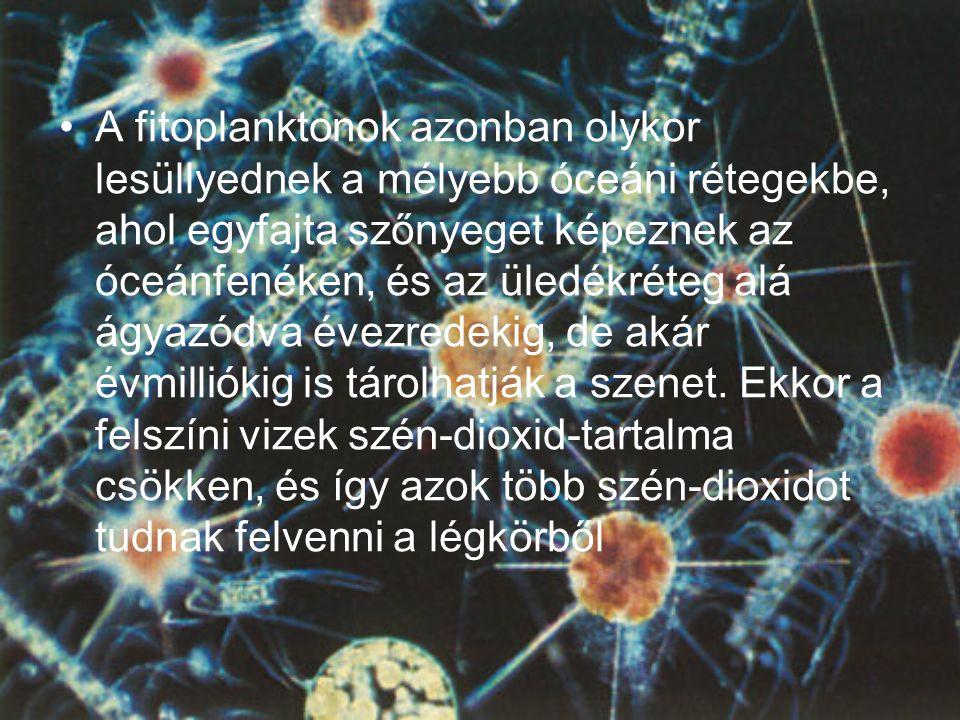 •A fitoplanktonok azonban olykor lesüllyednek a mélyebb óceáni rétegekbe, ahol egyfajta szőnyeget képeznek az óceánfenéken, és az üledékréteg alá ágyazódva évezredekig, de akár évmilliókig is tárolhatják a szenet.
