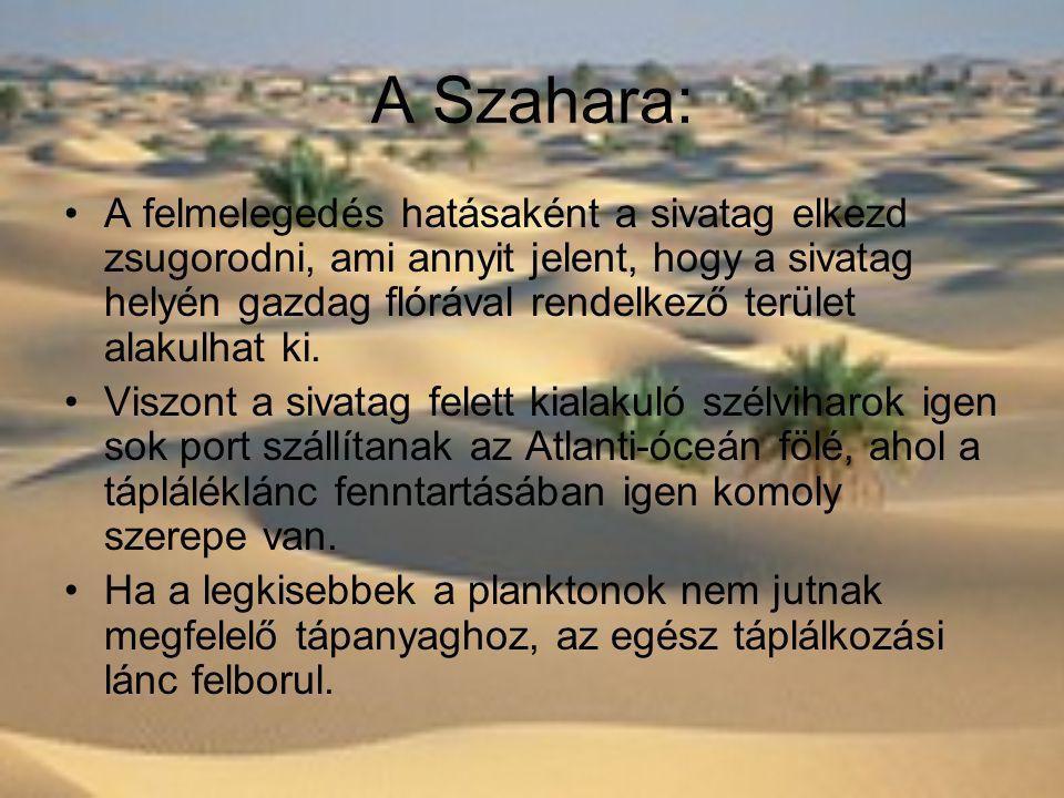 A Szahara: •A felmelegedés hatásaként a sivatag elkezd zsugorodni, ami annyit jelent, hogy a sivatag helyén gazdag flórával rendelkező terület alakulhat ki.
