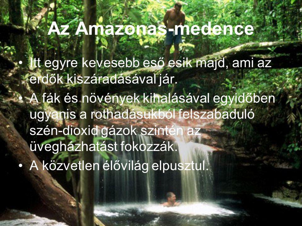 Az Amazonas-medence •Itt egyre kevesebb eső esik majd, ami az erdők kiszáradásával jár. •A fák és növények kihalásával egyidőben ugyanis a rothadásukb