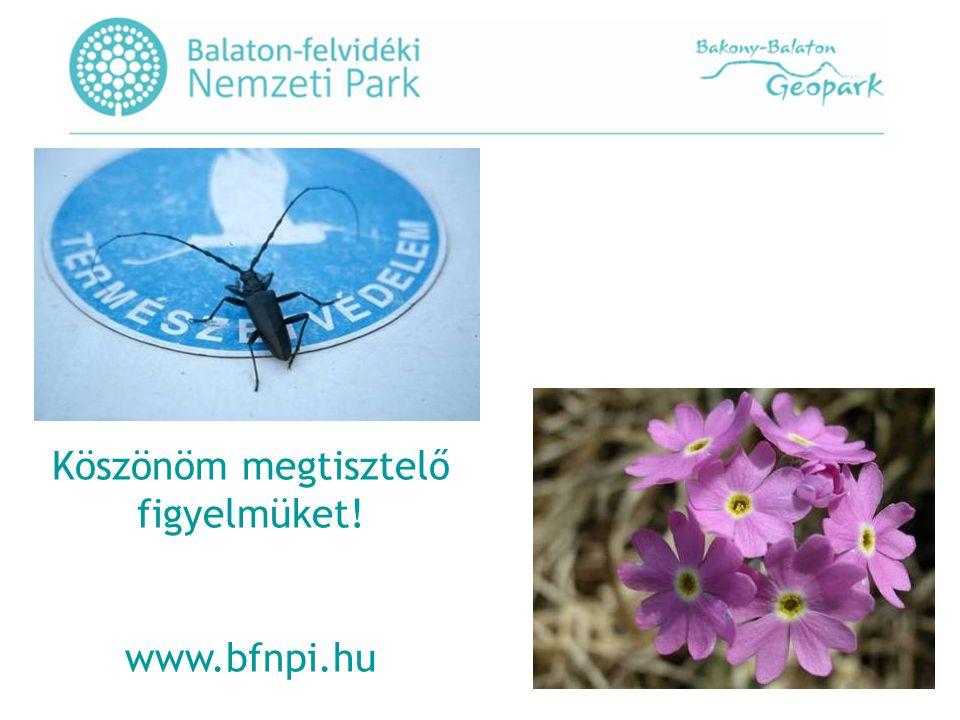Köszönöm megtisztelő figyelmüket! www.bfnpi.hu