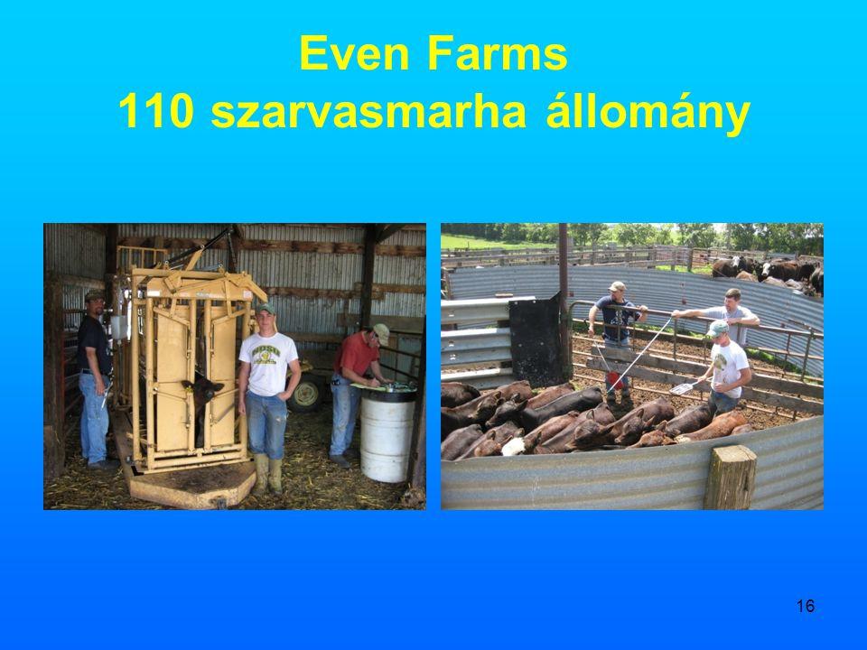 16 Even Farms 110 szarvasmarha állomány