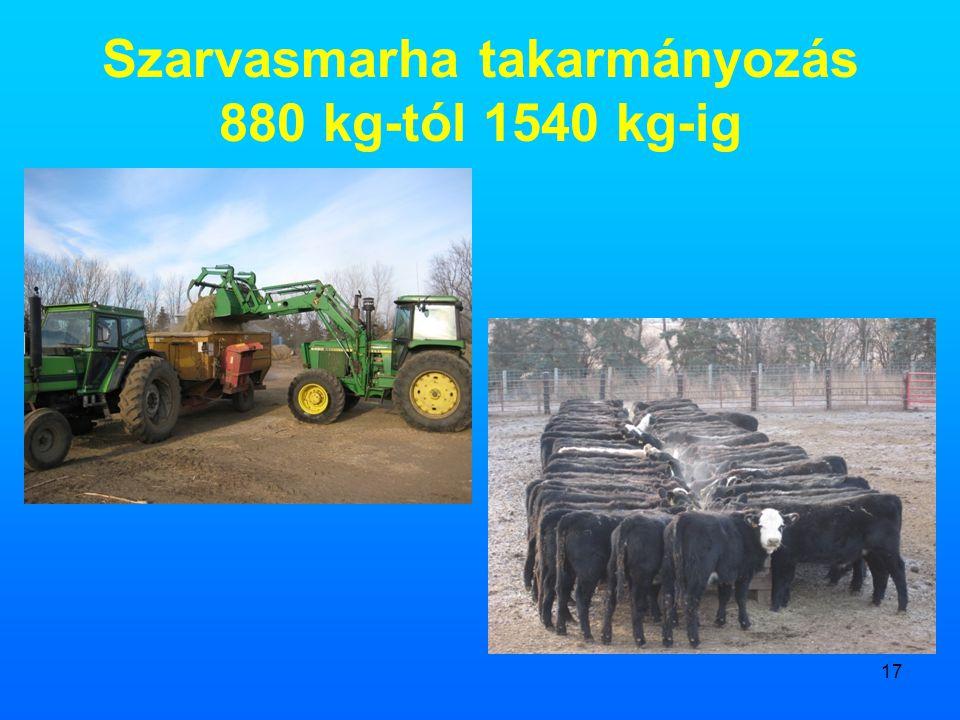 17 Szarvasmarha takarmányozás 880 kg-tól 1540 kg-ig