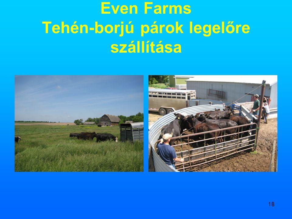 18 Even Farms Tehén-borjú párok legelőre szállítása
