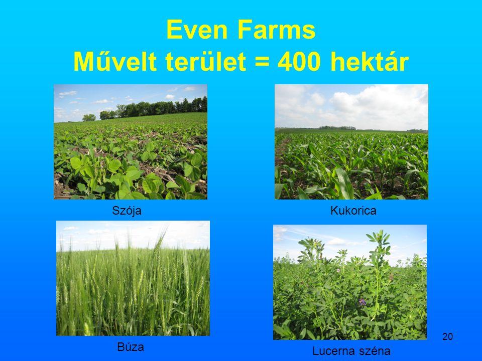 20 Even Farms Művelt terület = 400 hektár SzójaKukorica Búza Lucerna széna