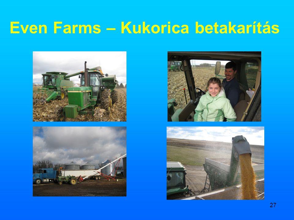 27 Even Farms – Kukorica betakarítás