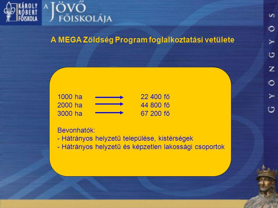 12 A MEGA Zöldség Program foglalkoztatási vetülete 1000 ha22 400 fő 2000 ha44 800 fő 3000 ha 67 200 fő Bevonhatók: - Hátrányos helyzetű települése, kistérségek - Hátrányos helyzetű és képzetlen lakossági csoportok