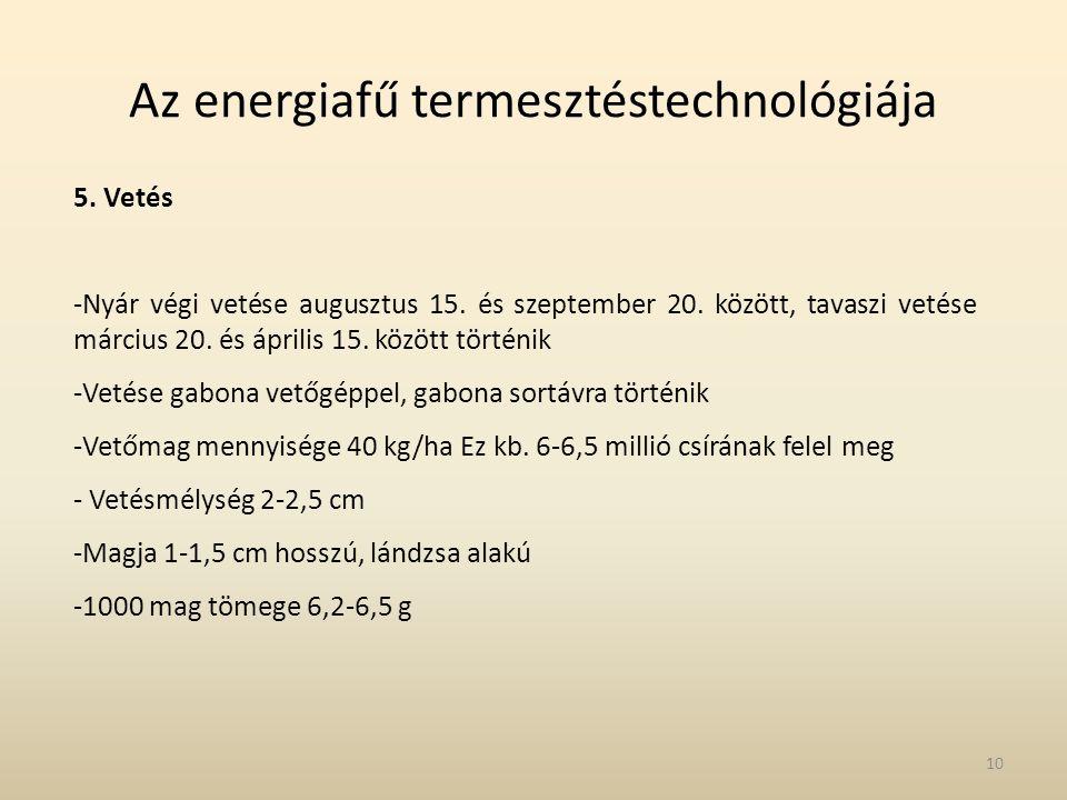 Az energiafű termesztéstechnológiája 5. Vetés -Nyár végi vetése augusztus 15. és szeptember 20. között, tavaszi vetése március 20. és április 15. közö
