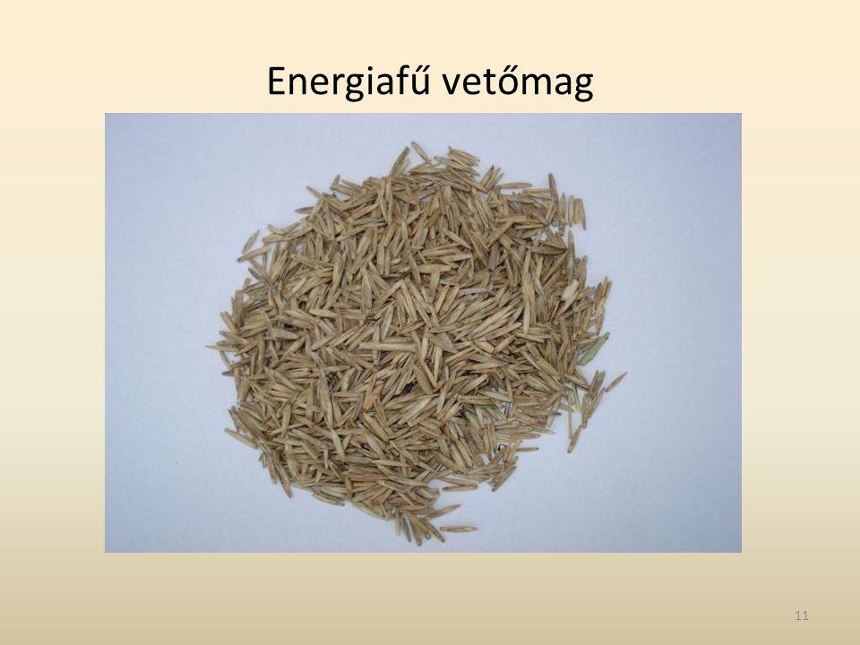Energiafű vetőmag 11