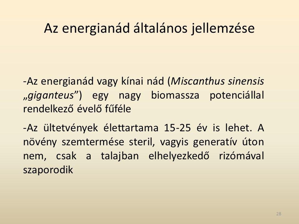 """Az energianád általános jellemzése -Az energianád vagy kínai nád (Miscanthus sinensis """"giganteus"""") egy nagy biomassza potenciállal rendelkező évelő fű"""