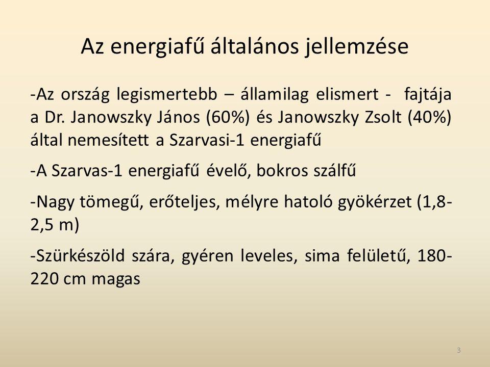 Az energiafű általános jellemzése -Az ország legismertebb – államilag elismert - fajtája a Dr. Janowszky János (60%) és Janowszky Zsolt (40%) által ne