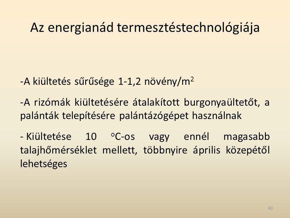 Az energianád termesztéstechnológiája -A kiültetés sűrűsége 1-1,2 növény/m 2 -A rizómák kiültetésére átalakított burgonyaültetőt, a palánták telepítés