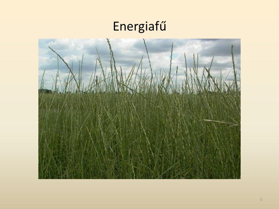 Energiafű 5