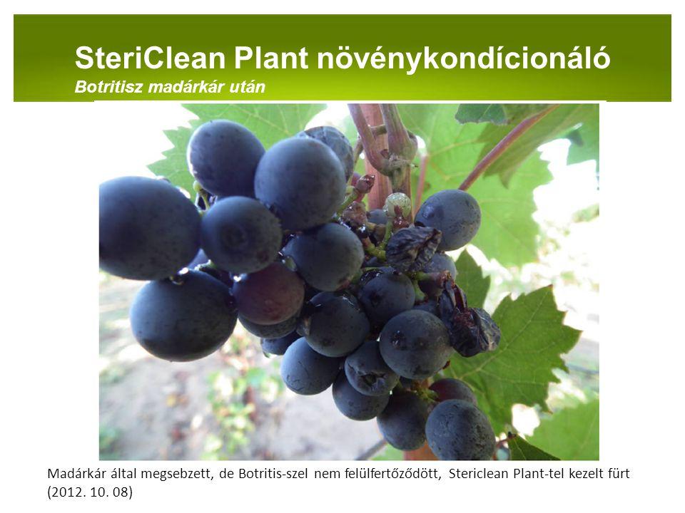 PANNON-RADE KFT.SteriClean Plant növénykondícionáló Botritisz madárkár után Madárkár által megsebzett, de Botritis-szel nem felülfertőződött, Stericle