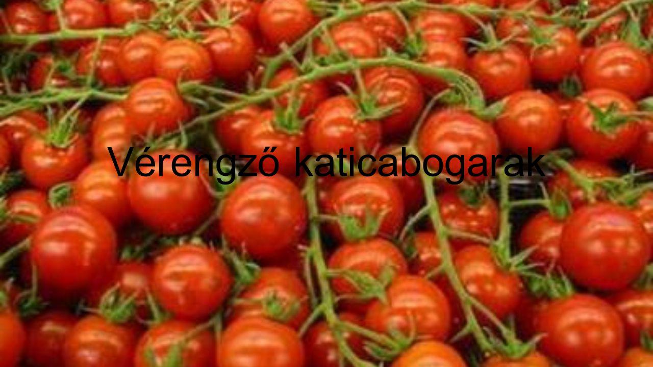 • Milyen szép is lenne ha mindenki megtehetné, hogy kisétál a kertbe és leszedi a salátának valót.