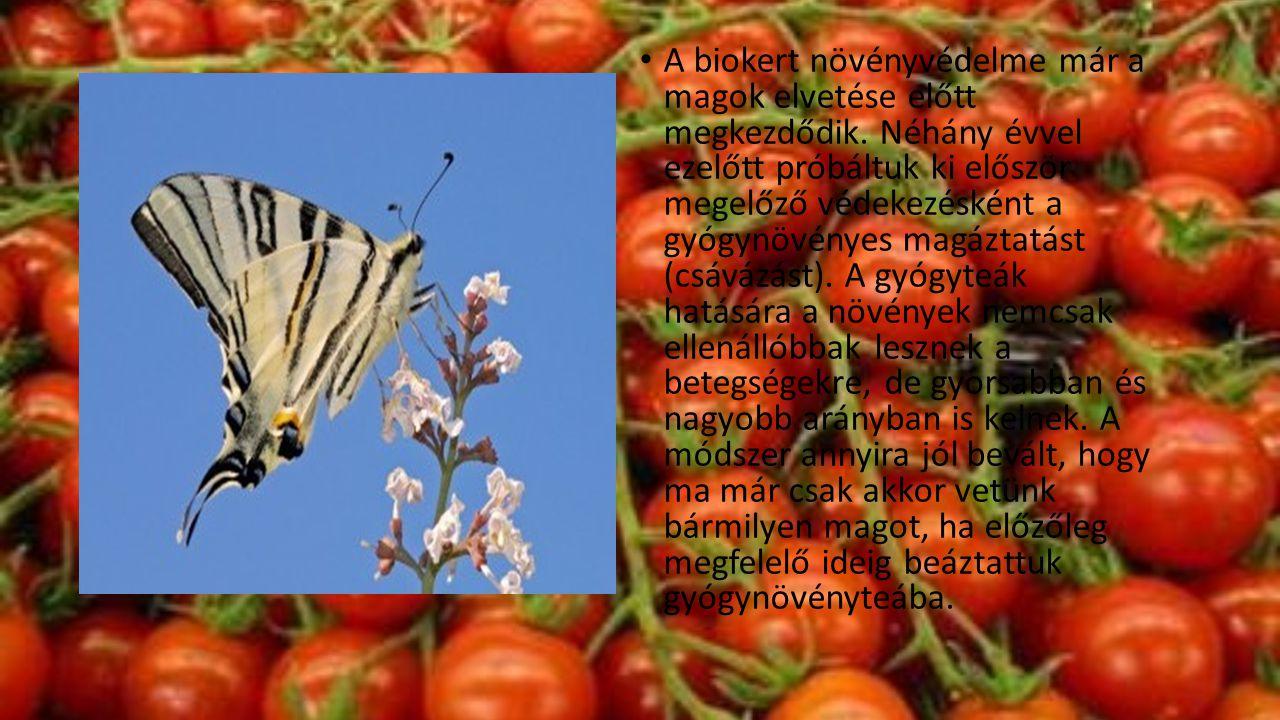 • A biokert növényvédelme már a magok elvetése előtt megkezdődik. Néhány évvel ezelőtt próbáltuk ki először megelőző védekezésként a gyógynövényes mag