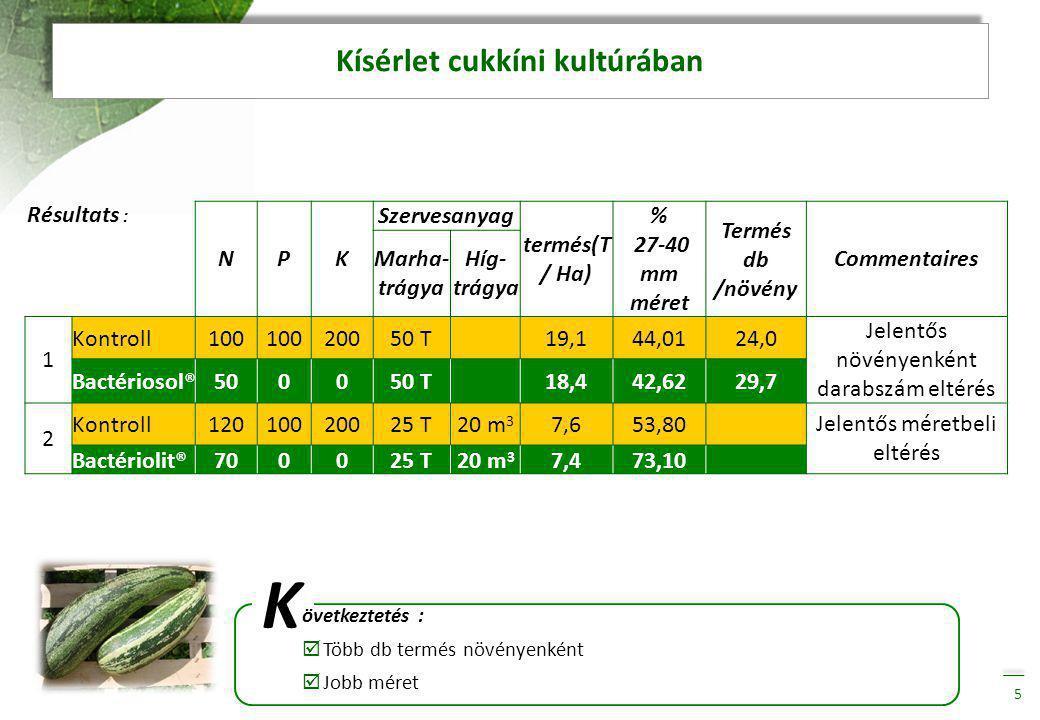 Kísérlet cukkíni kultúrában 5 Résultats : K övetkeztetés :  Több db termés növényenként  Jobb méret NPK Szervesanyag termés(T / Ha) % 27-40 mm méret Termés db /növény Commentaires Marha- trágya Híg- trágya 1 Kontroll100 20050 T 19,144,0124,0 Jelentős növényenként darabszám eltérés Bactériosol®500050 T 18,442,6229,7 2 Kontroll12010020025 T20 m 3 7,653,80 Jelentős méretbeli eltérés Bactériolit®700025 T20 m 3 7,473,10