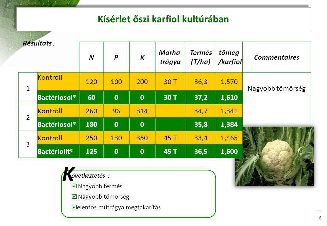 Kísérlet nyári karfiol kultúrában 7 Résultats : K NPK Betakarított termés (T/ha) Tömeg/ karfiol 1 Kontroll28015025023,20,927 Bactériosol®2000024,00,957 övetkeztetés :  Nagyobb termés  A karfiolok nagyobb súlyúak  Műtrágya megtakarítás