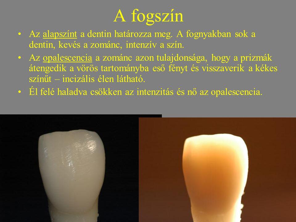 A fogszín •Az alapszínt a dentin határozza meg. A fognyakban sok a dentin, kevés a zománc, intenzív a szín. •Az opalescencia a zománc azon tulajdonság