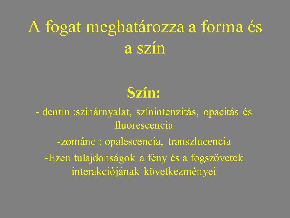 A fogat meghatározza a forma és a szín Szín: - dentin :színárnyalat, színintenzitás, opacitás és fluorescencia -zománc : opalescencia, transzlucencia