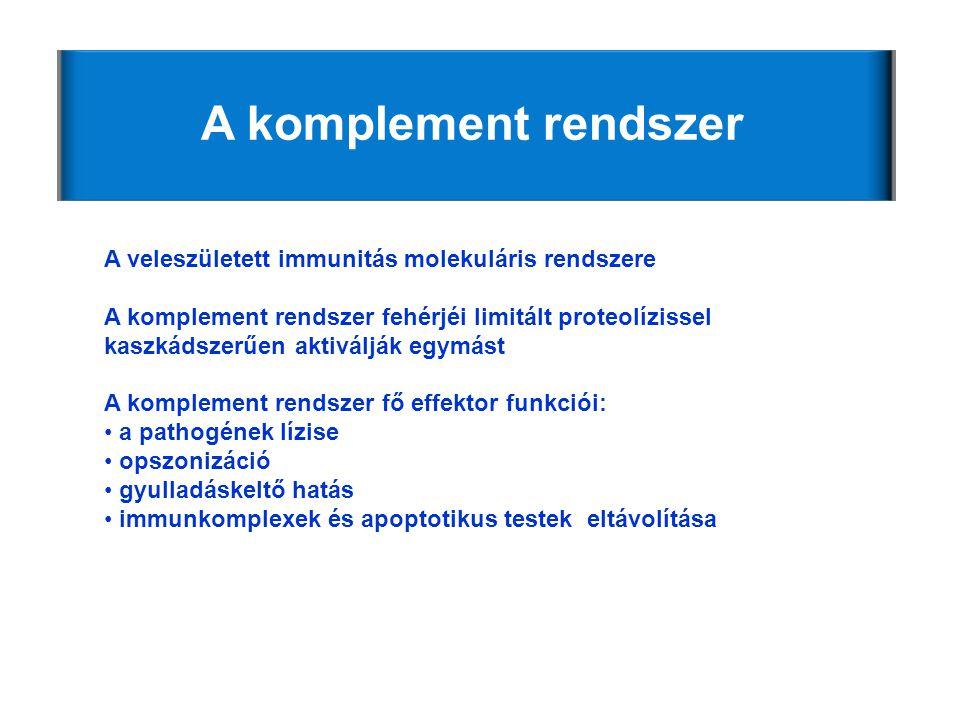 A komplement rendszer A veleszületett immunitás molekuláris rendszere A komplement rendszer fehérjéi limitált proteolízissel kaszkádszerűen aktiválják