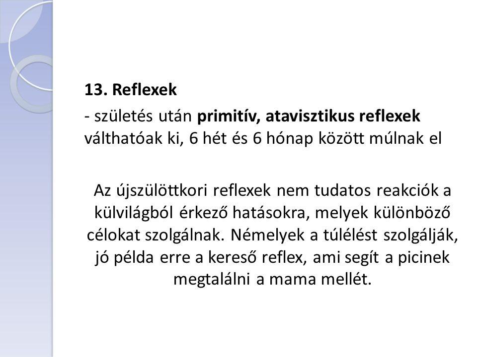 13. Reflexek - születés után primitív, atavisztikus reflexek válthatóak ki, 6 hét és 6 hónap között múlnak el Az újszülöttkori reflexek nem tudatos re