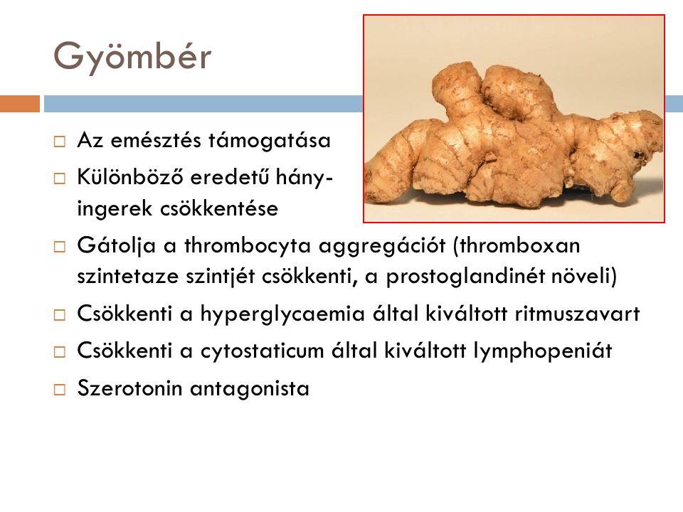 Gyömbér  Az emésztés támogatása  Különböző eredetű hány- ingerek csökkentése  Gátolja a thrombocyta aggregációt (thromboxan szintetaze szintjét csö