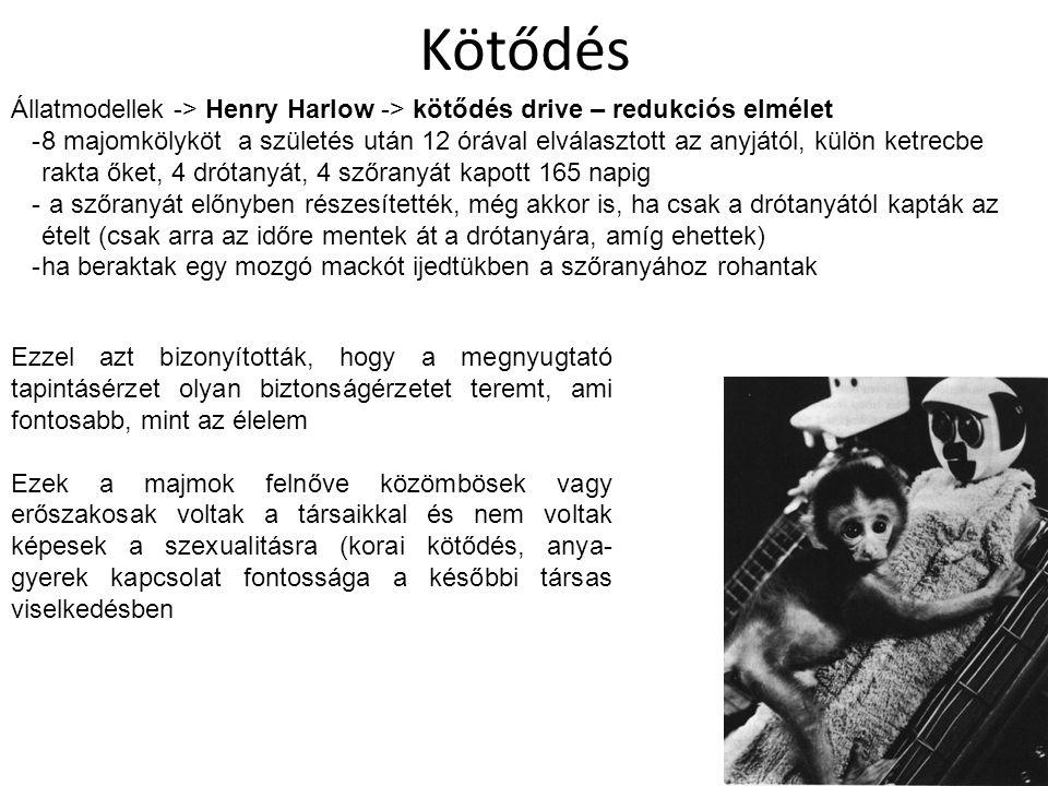 Kötődés Állatmodellek -> Henry Harlow -> kötődés drive – redukciós elmélet -8 majomkölyköt a születés után 12 órával elválasztott az anyjától, külön k