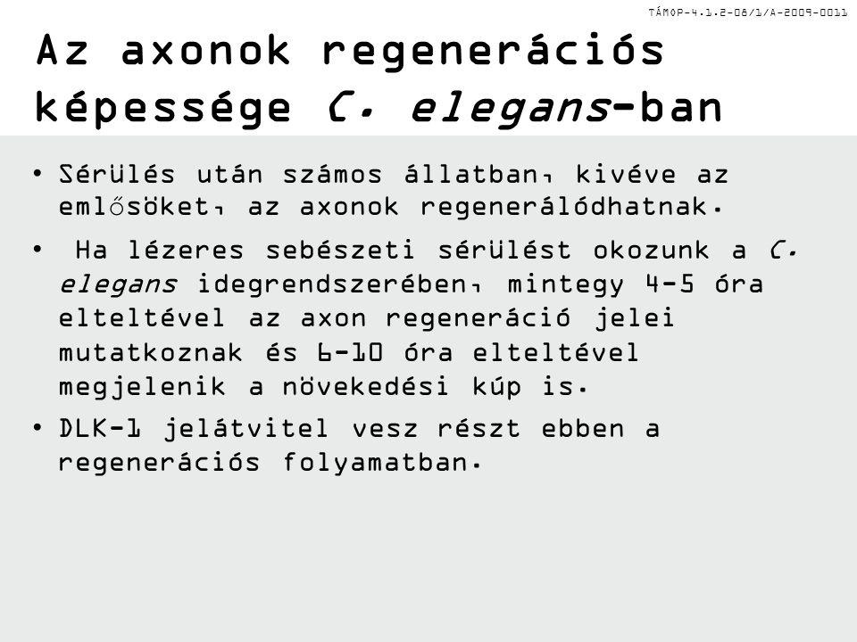 TÁMOP-4.1.2-08/1/A-2009-0011 Az axonok regenerációs képessége C.
