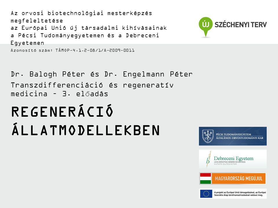 REGENERÁCIÓ ÁLLATMODELLEKBEN Az orvosi biotechnológiai mesterképzés megfeleltetése az Európai Unió új társadalmi kihívásainak a Pécsi Tudományegyetemen és a Debreceni Egyetemen Azonosító szám: TÁMOP-4.1.2-08/1/A-2009-0011 Dr.