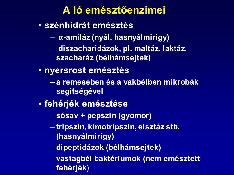 •szénhidrát emésztés – α-amiláz (nyál, hasnyálmirigy) – diszacharidázok, pl. maltáz, laktáz, szacharáz (bélhámsejtek) •nyersrost emésztés –a remesében