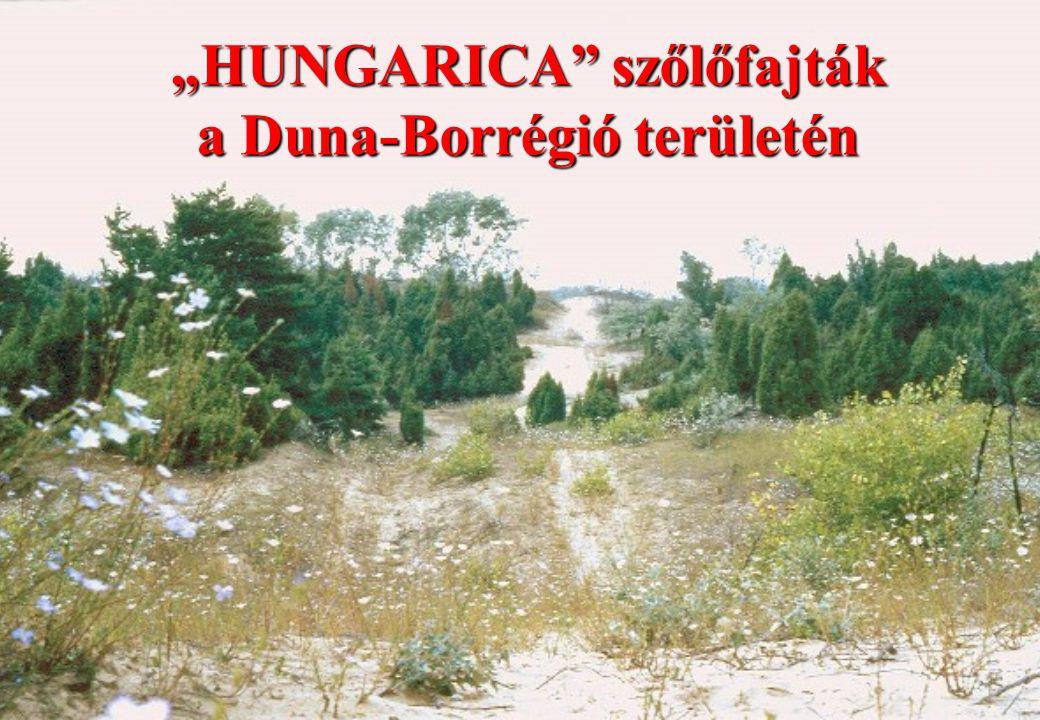 """""""HUNGARICA"""" szőlőfajták a Duna-Borrégió területén"""