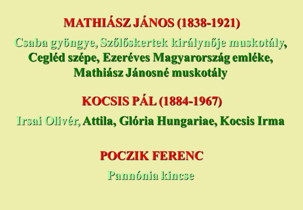 MATHIÁSZ JÁNOS (1838-1921) Csaba gyöngye, Szőlőskertek királynője muskotály, Cegléd szépe, Ezeréves Magyarország emléke, Mathiász Jánosné muskotály KO