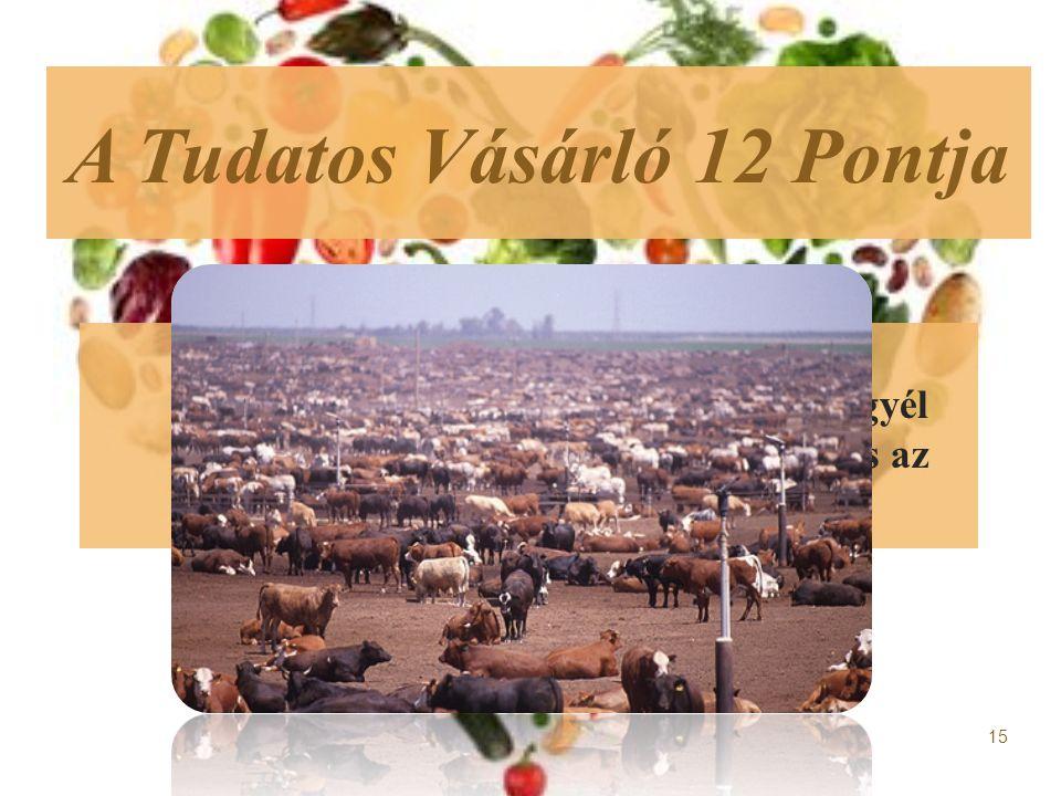  1.Az állattartás jobban hozzájárul a klímaváltozáshoz, mint a közlekedés.