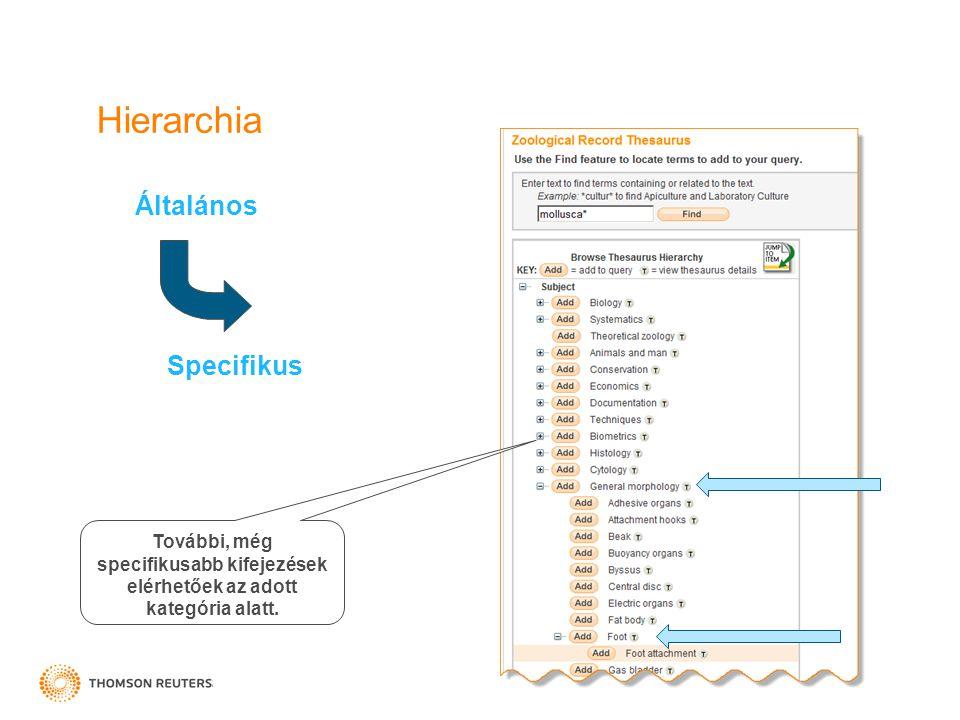 Hierarchia Általános Specifikus További, még specifikusabb kifejezések elérhetőek az adott kategória alatt.