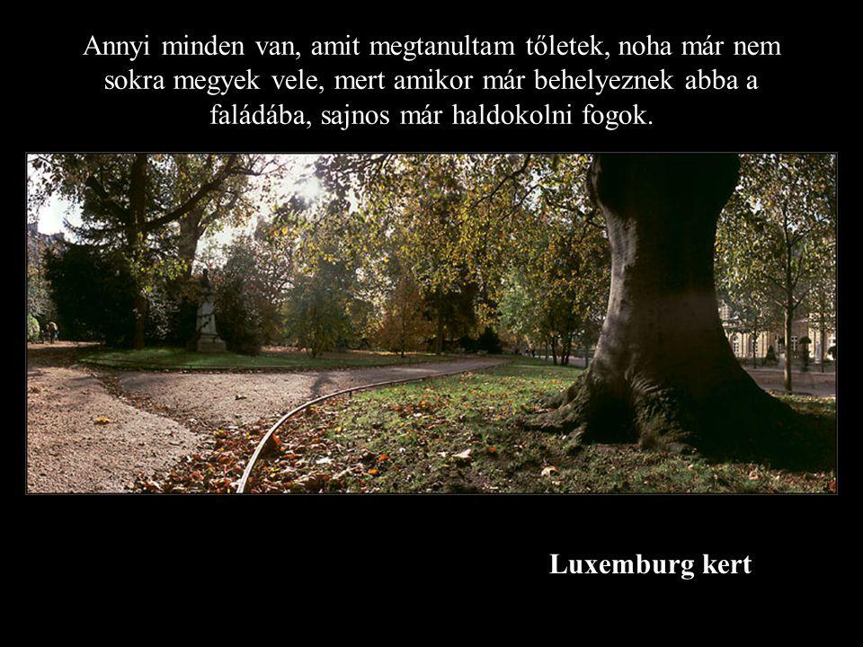 Luxemburg kert Annyi minden van, amit megtanultam tőletek, noha már nem sokra megyek vele, mert amikor már behelyeznek abba a faládába, sajnos már haldokolni fogok.