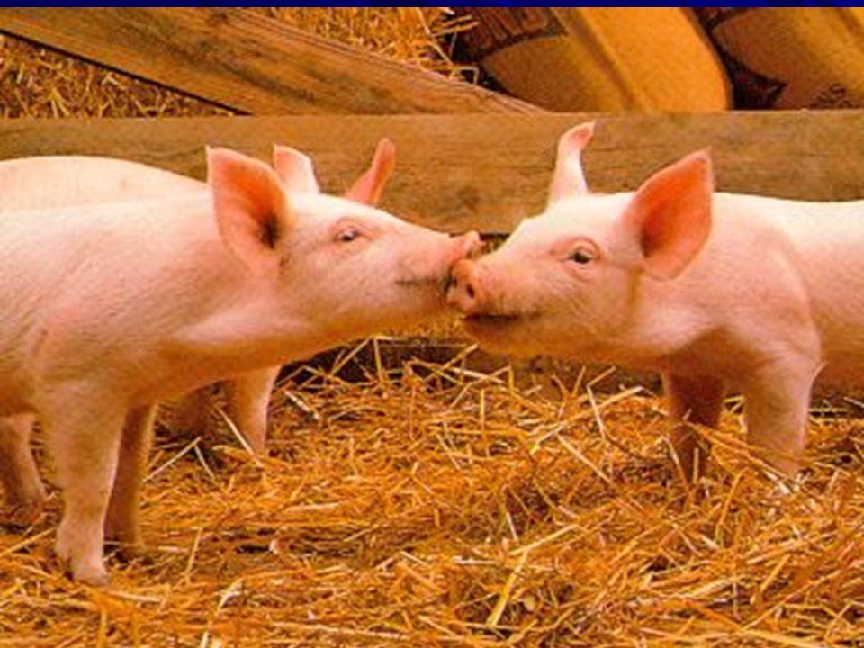 Az állatok érezni, szenvedni és örülni képes élőlények tiszteletben tartásuk, jó közérzetük biztosítása minden ember erkölcsi kötelessége!!!!!