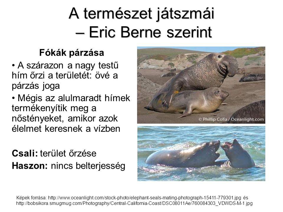 A természet játszmái – Eric Berne szerint Fókák párzása • A szárazon a nagy testű hím őrzi a területét: övé a párzás joga • Mégis az alulmaradt hímek