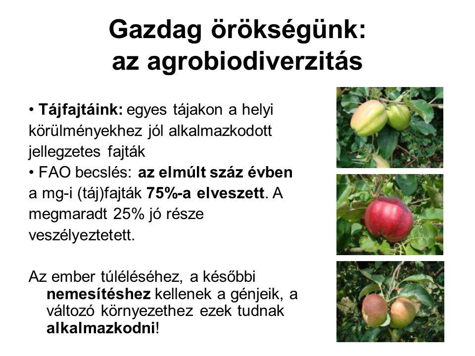 Gazdag örökségünk: az agrobiodiverzitás • Tájfajtáink: egyes tájakon a helyi körülményekhez jól alkalmazkodott jellegzetes fajták • FAO becslés: az el
