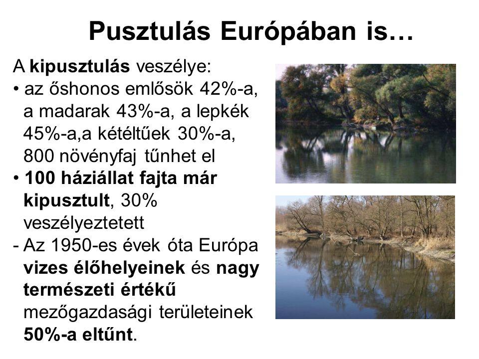 Pusztulás Európában is… A kipusztulás veszélye: • az őshonos emlősök 42%-a, a madarak 43%-a, a lepkék 45%-a,a kétéltűek 30%-a, 800 növényfaj tűnhet el