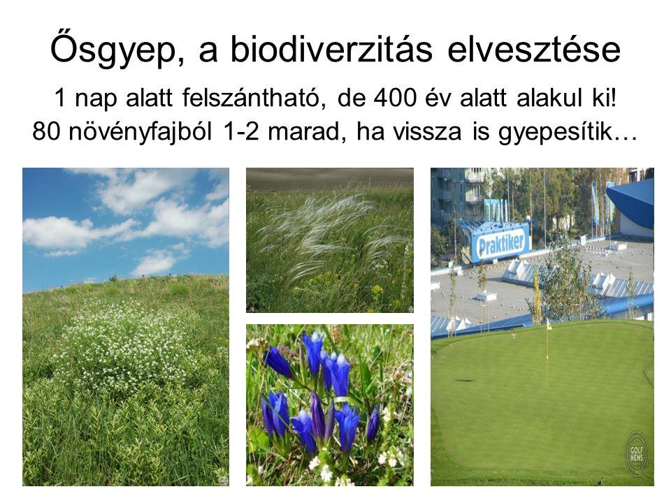 Ősgyep, a biodiverzitás elvesztése 1 nap alatt felszántható, de 400 év alatt alakul ki! 80 növényfajból 1-2 marad, ha vissza is gyepesítik…