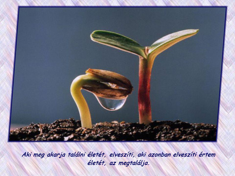 Már itt a földön megtapasztalhatjuk, hogy az élet úgy növekszik bennünk, ha önmagunkat odaajándékozzuk, és szeretetben élünk. Ha egész napunkat mások