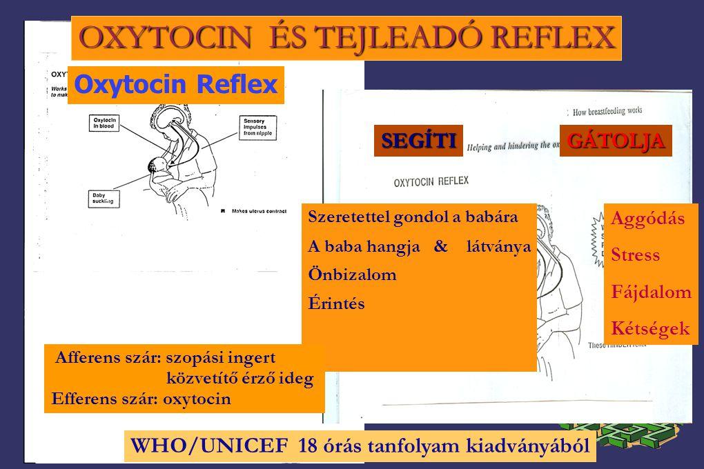 OXYTOCIN ÉS TEJLEADÓ REFLEX Aggódás Stress Fájdalom Kétségek Szeretettel gondol a babára A baba hangja & látványa Önbizalom Érintés Afferens szár: szopási ingert közvetítő érző ideg Efferens szár: oxytocin SEGÍTIGÁTOLJA WHO/UNICEF 18 órás tanfolyam kiadványából Oxytocin Reflex