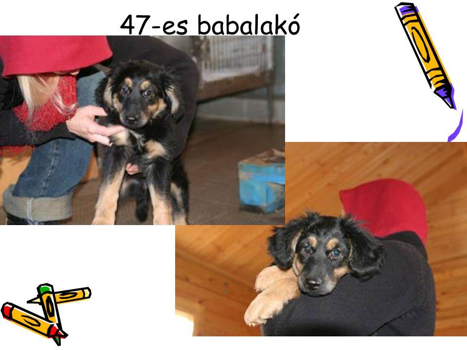 47-es babalakó